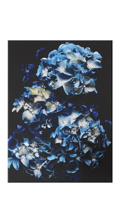 Blooms in Blue Canvas - This beautiful blooms in blue floral printed canvas from Graham & Brown is the perfect addition to brighten up any tired wall. The vibrant shades of blue are perfect contrasted against the black background ideal to create an eye catching centerpiece within any home.