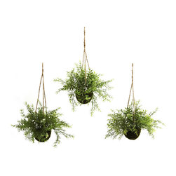 Nearly Natural - Nearly Natural Ruscus, Sedum & Springeri Hanging Basket (Set of 3) - At home in a kitchen, dining area, or an office reception area, these wonderful Ruscus, Sedum & Springeri Hanging Baskets will certainly liven up any dicor. With a light, almost fluffy look, the green sprigs and leaves reach out, as if to beg a passerby to touch them. best of all, these hanging baskets will stay fresh looking for years with nary a drop of water. Buy one set for yourself, and another for a friend.