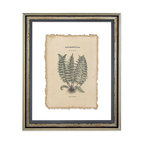 Antique Fern II Print on Antiqued Papyrus - Antique botanical prints remain ever-popular for their nostalgia and understated beauty, even as the icon of the attentive naturalist fades from culture.  Resurrect tradition with this reproduction print: a scientifically detailed, carefully shaded, beautifully tinted, and neatly labeled study illustration of a fern.  The print is on natural parchment paper caught between panes of glass, so your wall treatment shows between its natural torn edge and the antiqued silver double frame.