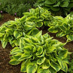Wide Brim Plantain Lily - Photo By Doreen Wynja © EyeoftheLady.com