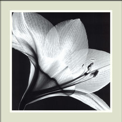 "Amanti Art - ""Amaryllis 1"" Framed Print by Steven N. Meyers - Turn a negative into a positive piece of wall art with this stunning framed print. Anyone can have flowers, but likely haven't seen an amaryllis in this light. It shows that the beauty of a flower goes far beyond its color."