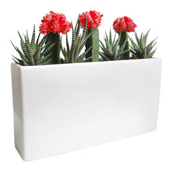 LushModern - Tropical Burst With White Gloss Planter - LushModern complete kits contain everything you need to add a touch of natural flair to your home.