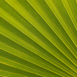 Murals Your Way - Palm Leaf Wall Art - The color green is thought to be calming, lucky, and to signify new life