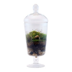 Twig Terrariums - Twig Terrarium Picture That - Picture That contains a photographer with a great eye, dwelling within the snapspot world of a beautiful apothecary jar!  Little female photographers will vary, all of them absolutely adorable.