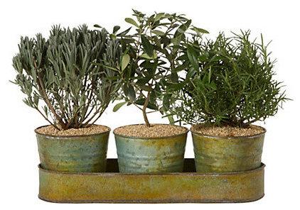 Mediterranean Plants by Terrain