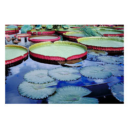 Custom Photo Factory - Water Garden Canvas Wall Art - Water Garden  Size: 20 Inches x 30 Inches . Ready to Hang on 1.5 Inch Thick Wooden Frame. 30 Day Money Back Guarantee. Made in America-Los Angeles, CA. High Quality, Archival Museum Grade Canvas. Will last 150 Plus Years Without Fading. High quality canvas art print using archival inks and museum grade canvas. Archival quality canvas print will last over 150 years without fading. Canvas reproduction comes in different sizes. Gallery-wrapped style: the entire print is wrapped around 1.5 inch thick wooden frame. We use the highest quality pine wood available. By purchasing this canvas art photo, you agree it's for personal use only and it's not for republication, re-transmission, reproduction or other use.
