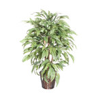 Vickerman - 4' Mango Extra Full - 4' Mango Extra Full Bush on three or more Dragonwood trunks. Dark brown Rattan container. American made excelsior