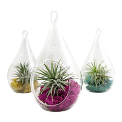 Small Droplet Air Plant Terrarium // Choose Your Own Moss Color - This super cute water drop terrarium houses a single Tillandsia ionantha and a small clump of reindeer moss. Choose your own color moss to match your decor. Easy to care for. Provide bright, indirect light (or fluorescent lighting). Remove the plant and water once or twice a week. Allow the plant to fully dry prior to placing back in the glass vessel.