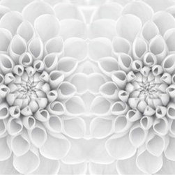 Walls Republic - White Bloom Mural Wallpaper M8955 - 4 Panels - White Bloom is an enlarged white dahlia flower digital wallpaper mural. This shaded pattern is a soft and calming feature in your living room.