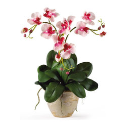 Nearly Natural - Triple Mini Phalenopsis Silk Orchid Arrangement - Three times the splendor - that's our 20' Triple Mini Phalaenopsis Silk Orchid Plant! It's perfect for smaller shelves or areas where our taller silk arrangements won't fit, yet it offers all of the same features such as three stems of full-blooming silk flowers and buds, bamboo stakes to support the stems, and plenty of lush foliage and aerial roots. It comes expertly arranged in a lovely ceramic pot, ready for display.