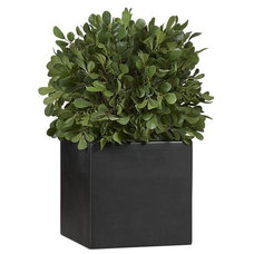 Modern Plants by Crate&Barrel