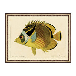 Frontgate - Ichthyes II - Classic antiqued print. Fresh, vibrant colors. Silver leaf and black frame with interior beaded edge. Arrives ready to hang. Ichthyes 2 depicts the raccoon butterflyfish, a tropical fish found in the Indo-Pacific region and in the southeast Atlantic. This nocturnal fish is one of the hardier varieties of butterflyfish, and this image seems to boast the species' distinct character.  .  .  . .