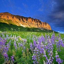 Magic Murals - Colorado Mountains and Wildflowers Wallpaper Wall Mural - Self-Adhesive - Multip - Colorado Mountains and Wildflowers Wall Mural