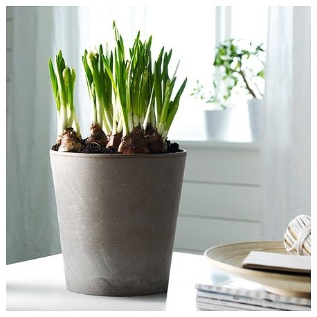 MANDEL Plant Pot - Contemporary - Indoor Pots And Planters ...