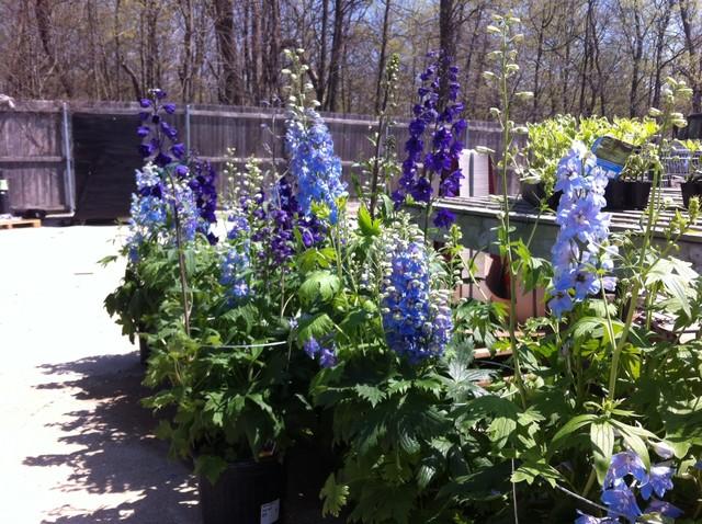 Perennials - greenhouse joy traditional-greenhouses