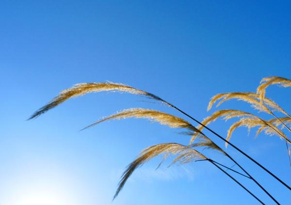 Pampas Grass modern-artwork