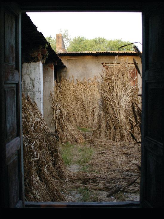 Wheat Harvest - Travel Photography, 8.5 x 11 in., film, original work, unique