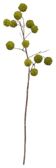 Chestnut Branch contemporary plants
