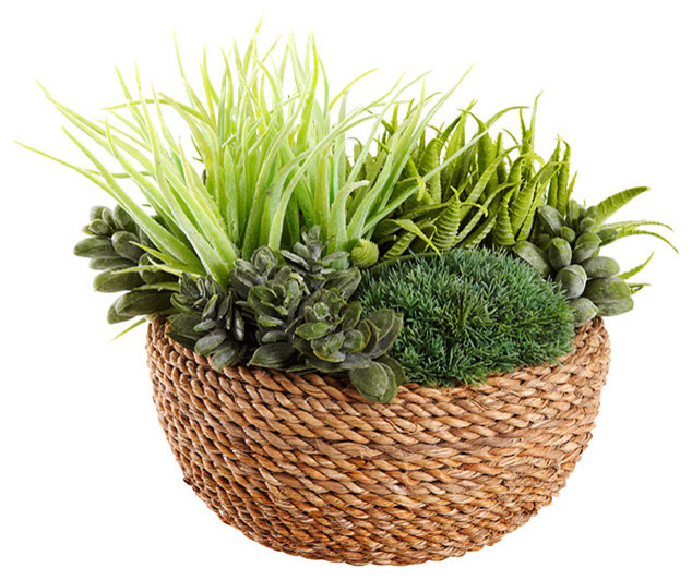 Air plant in rattan basket contemporary plants other metro by target australia