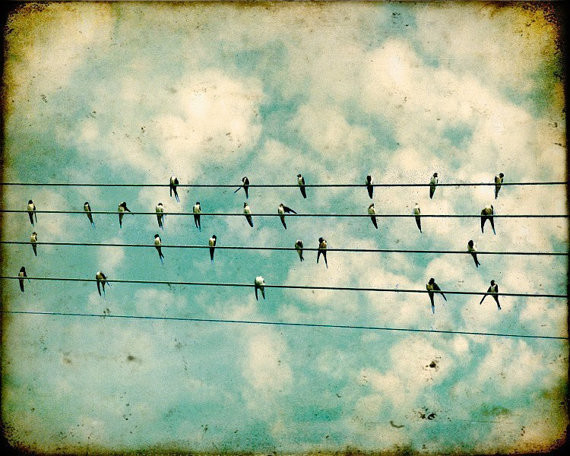 Fine Art Bird Photography Print Flock by Bomobob modern artwork