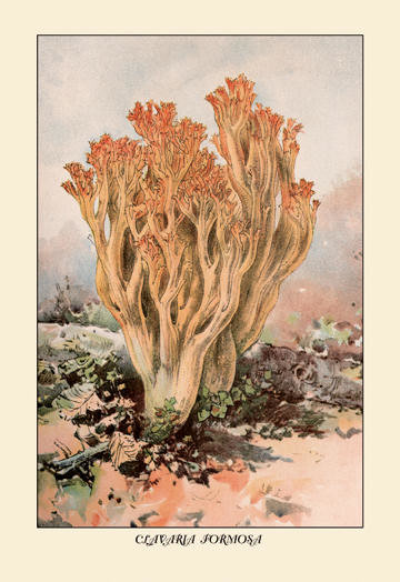 Clavaria Formosa 12x18 Giclee on canvas contemporary-prints-and-posters