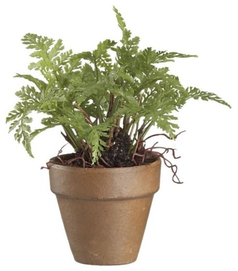 Mini potted fern modern plants by crate barrel for Indoor decorative live plants