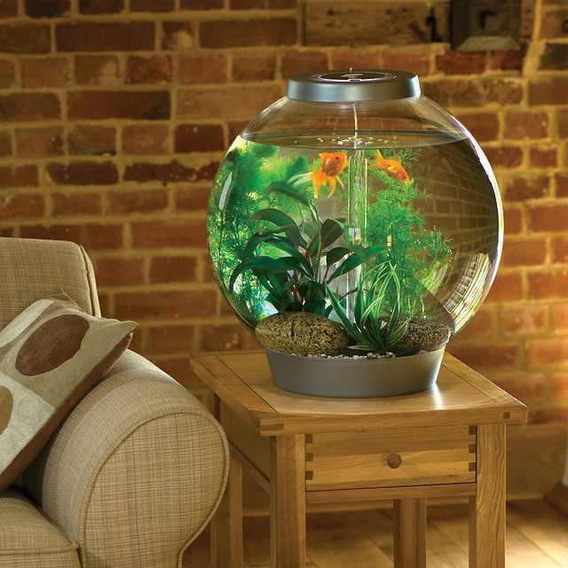 Biorb 8 gallon aquarium traditional fish supplies by for 10 fish are in a tank riddle answer