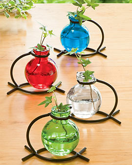 Glass Tabletop Rooting Vase eclectic vases