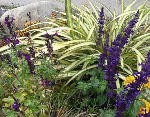 Plant Combinations eclectic-landscape