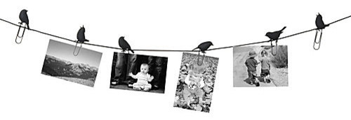 Birds on a Wire Photo Display eclectic frames