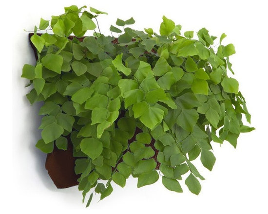 Wally One LIving Wall Planter -