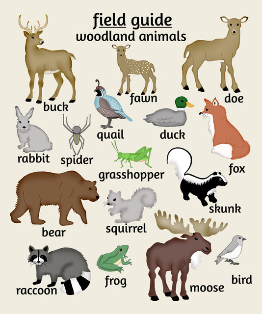 Nursery Art, Woodland Animals nursery-decor