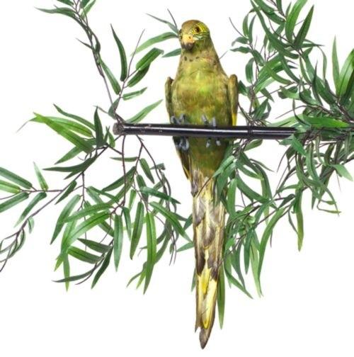 "Feathered Parrot 19"" modern-artwork"