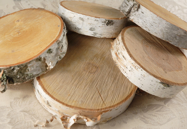 Birch Tree Slices Traditional Home Decor By Save on