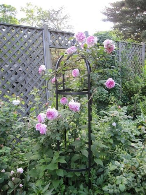 roses for obelisks. Black Bedroom Furniture Sets. Home Design Ideas