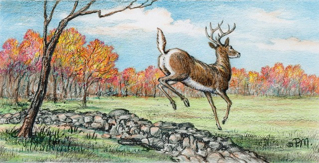 """Jumping Whitetail"" by Paul McGehee traditional-artwork"