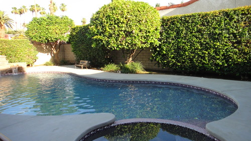 Landscapers I Need Help With Plantings Around Pool