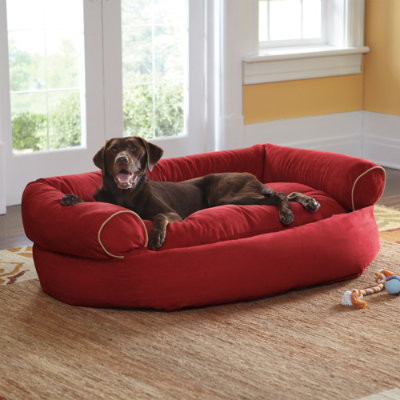 Sofa Dog Bed Grandin Road Contemporary Beds By