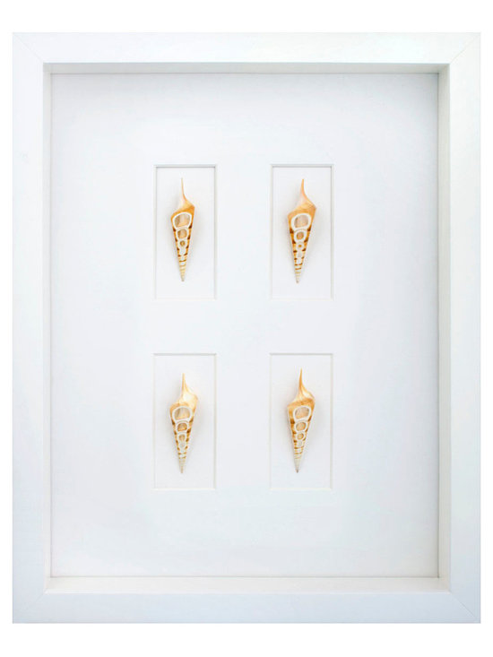 Tibia Four Cut Shell Shadowbox - A collection of four Arabian tibia shells, exquisitely formed and gifted by the sea, imbue the Arabian Tibia 4-cut Shell Shadowbox with a rarefied beauty. The shells are artfully presented on a white mat board that accentuates their distinctive cutouts and color striations. The white wood frame surrounding the glass completes the sophisticated and monochromatic tone of the background.