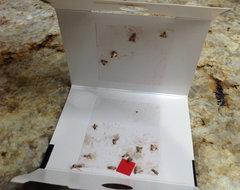 Pantry Moths  The WORST!