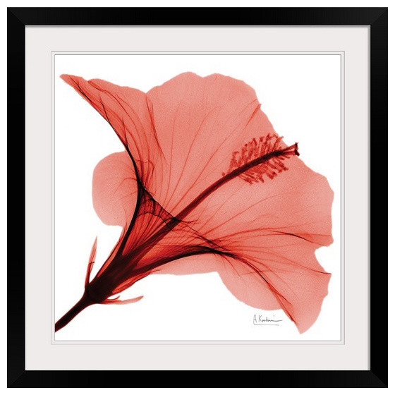 Red Hibiscus X Ray Photography Wall Art By Albert Koetsier