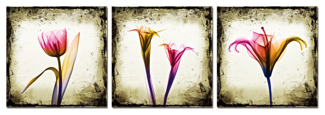 Tulips Exposed Print contemporary-prints-and-posters