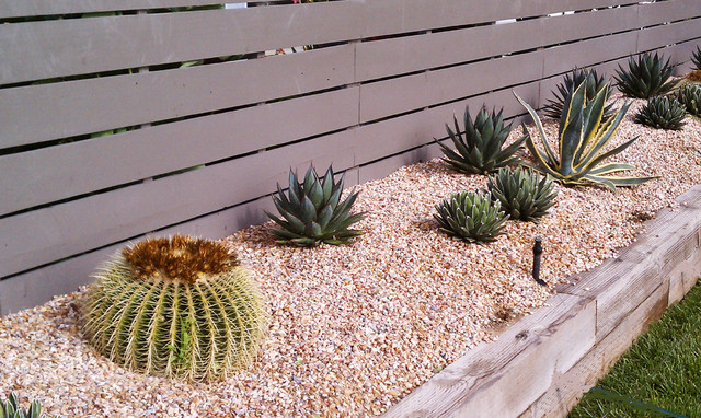 Cactus and succulent garden for Cactus garden designs