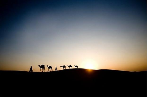 India Camels modern-artwork