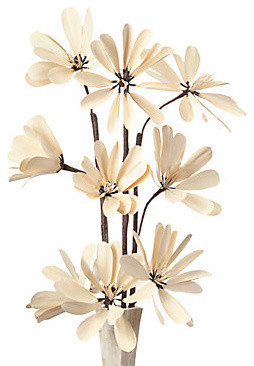 Snow Lotus -Natural Set of 3 modern-plants