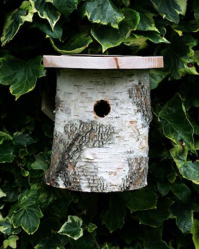 Silver Birch Nesting Box traditional-birdhouses