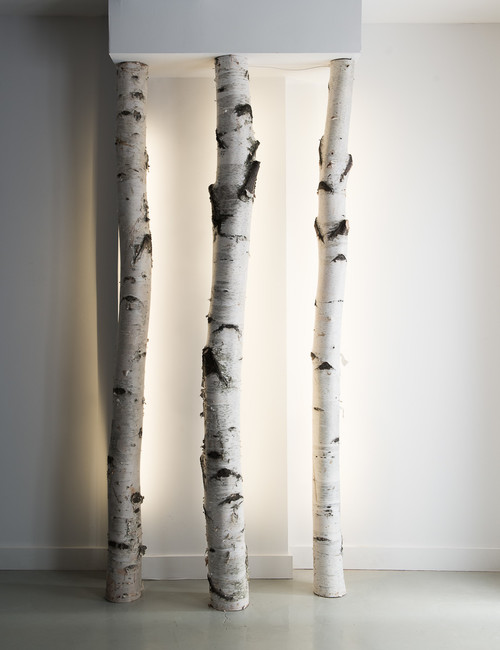 decorative birch branches trees logs suppliers of. Black Bedroom Furniture Sets. Home Design Ideas
