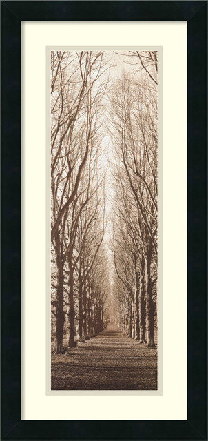 Poplar Trees Framed Print by Alan Blaustein traditional-prints-and-posters