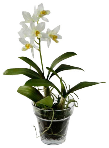 Dendrobium Orchid in Glass Pot, White traditional-artificial-flowers-plants-and-trees