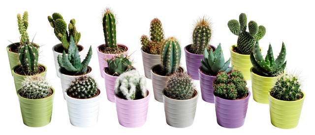 cactaceae plant in pot modern indoor pots and planters by ikea. Black Bedroom Furniture Sets. Home Design Ideas